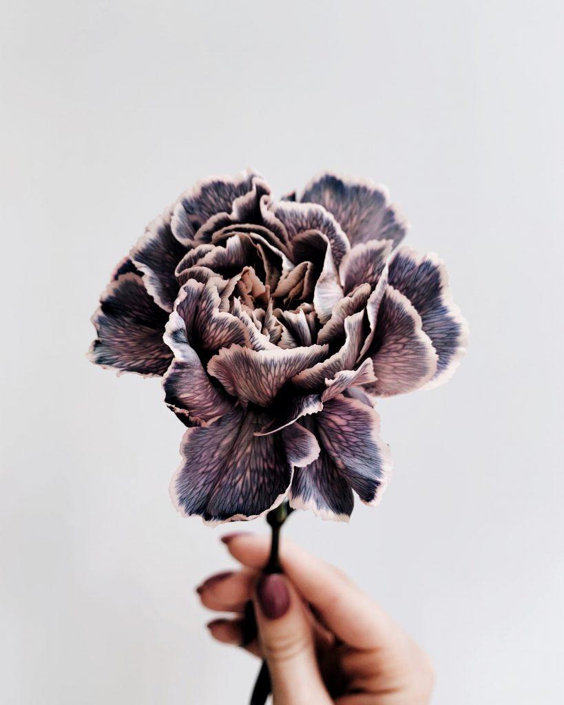fleur, fleur violette, ces petits riens qui font grands biens